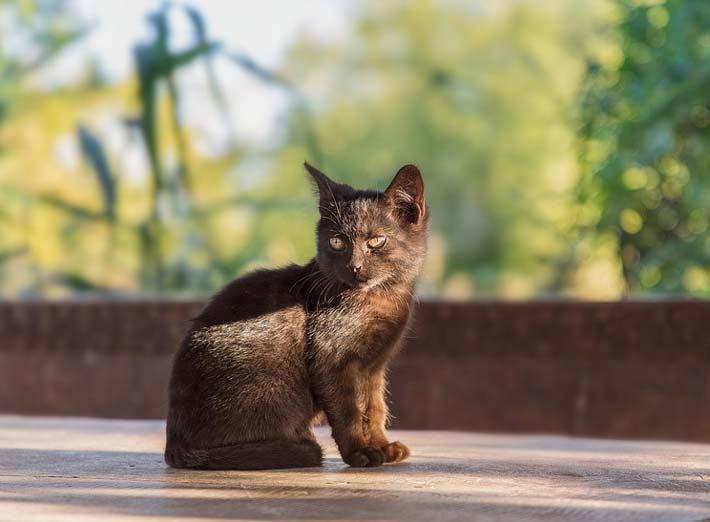 анализ сказки кошкин дом маршак